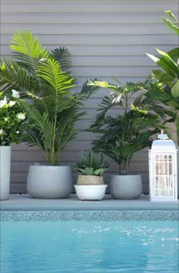 Faux succulents and palm plants from Seaway Pools